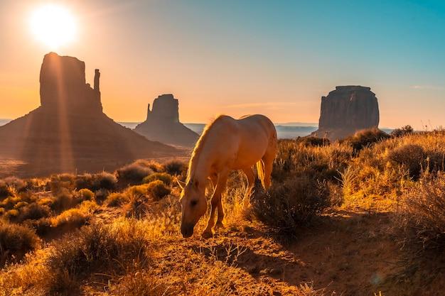 ユタ州モニュメントバレーの夜明けに食べる美しい白い馬