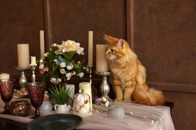 美しい若い赤いメインクーン猫は、皿、キャンドル、花でお祝いに出されるテーブルに座っています