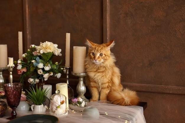 美しい若い赤いメインクーン猫がお祝いのテーブルに座っています