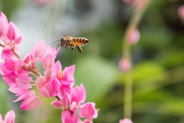 Пчела летит к красивому цветку.