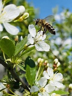 リンゴの木に蜂