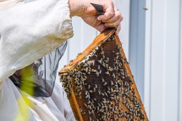 보호복을 입은 양봉가는 벌집이 있는 틀을 잡고 양봉장에서 꿀벌을 검사합니다. 꿀 수확을 준비합니다.