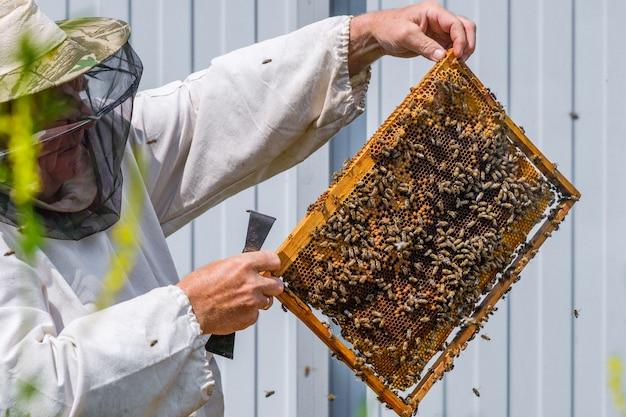 Пчеловод в защитной одежде держит рамку с сотами