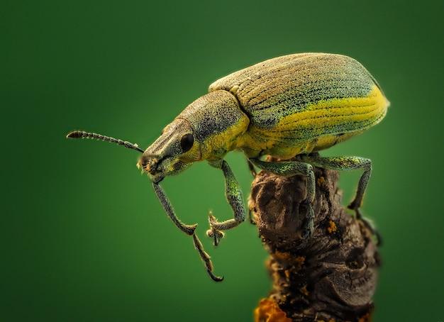딱정벌레가 나뭇가지에 앉아 있다
