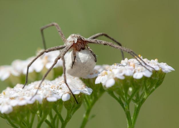 딱정벌레는 꽃에 앉아