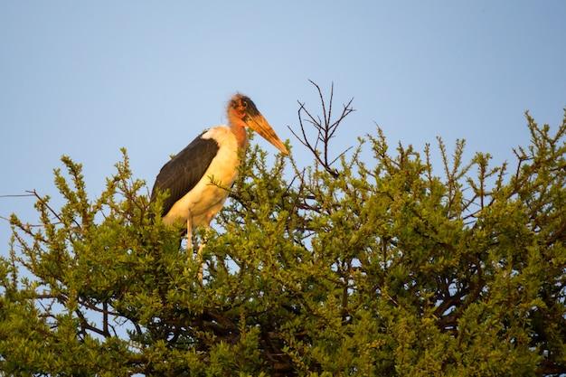 大きな猛禽類が枝に座る