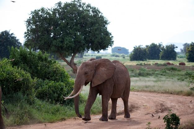 道を歩いている大きな赤い象
