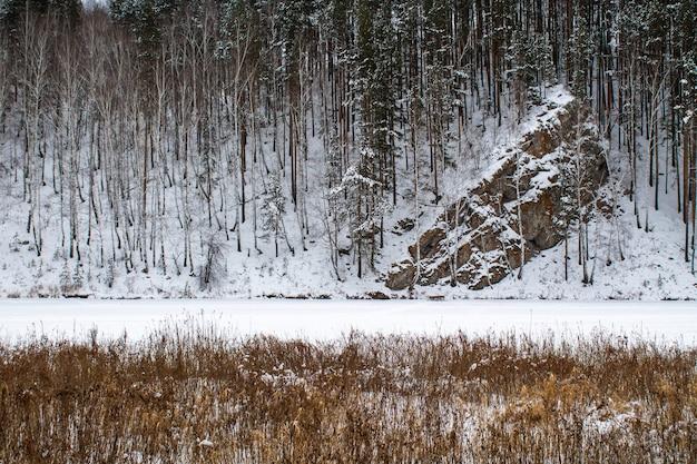 雪の中で大きな岩。背の高い松と曇り空。