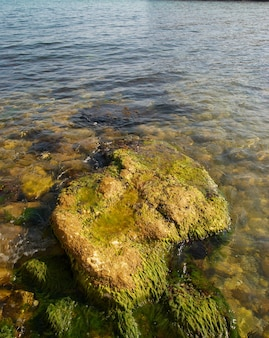 Большой камень с зелеными морскими водорослями.