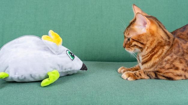 大きなおもちゃのネズミとペットの猫がソファでお互いを見つめています