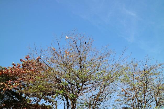 秋のオレンジ、赤の葉、青空の大きな木。自然の概念。