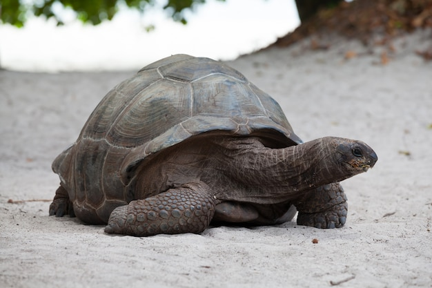 세이셸 해변에 큰 거북이