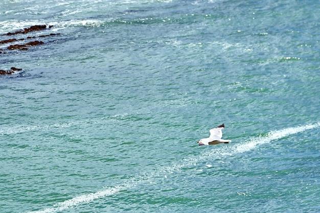 水面上を飛ぶ鳥カモメが海面に浮かんでいる