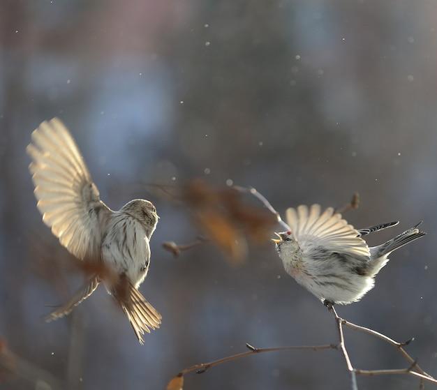 鳥が枝に座っています