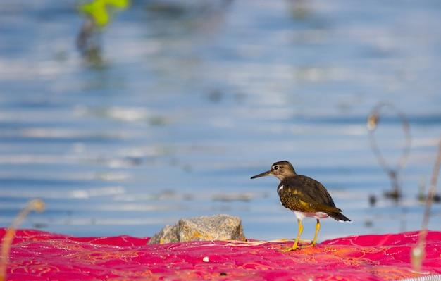 生計を立てるための餌を探している池の近くの鳥