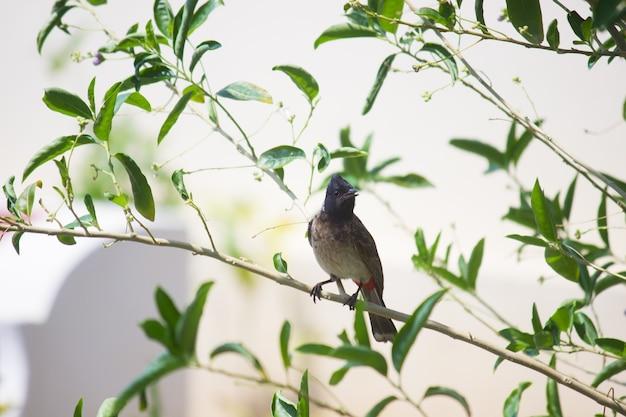 植物の枝にとまり、周りを見回す鳥