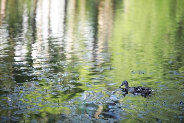 화창한 날에 새 한 마리가 호수에 있는 연못에서 휴식을 취합니다. 수련이 배경에서 흔들리고 있습니다.