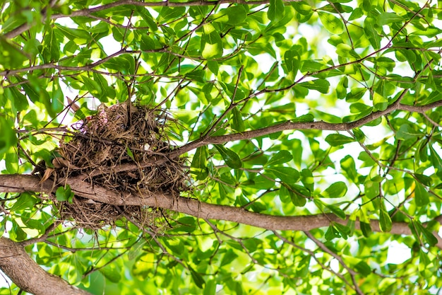 나무에 나무 상자를 만드는 잔해 나무와 풀로 가득 찬 새의 둥지.