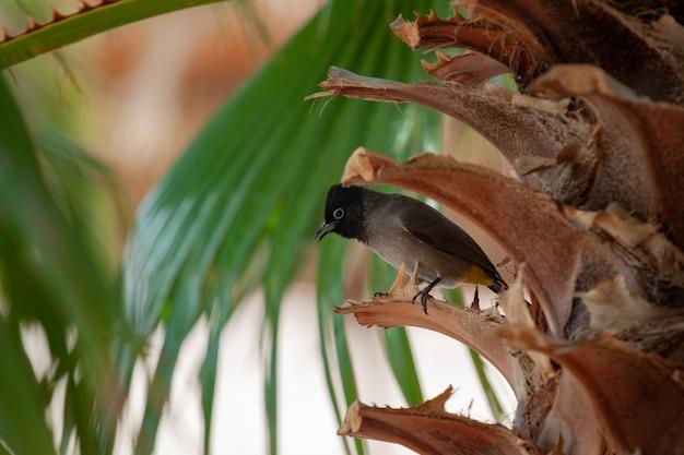 ヤシの木の枝に鳥が立っています