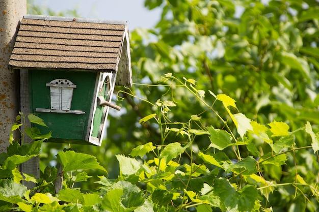 녹색 잎에 새집입니다.새를 위한 집입니다. 새 집. 직접 만든 새집