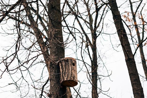 나무에 새집 학교 아이들이 만든 집에서 만든 새집
