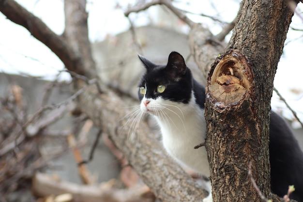 黒と白の猫が木に登った