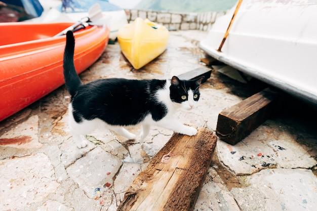Черно-белый кот идет между лодками на лодочной станции