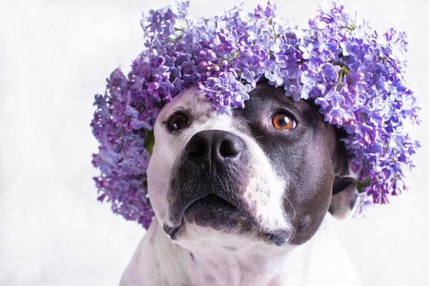 Черно-белая собака в сиреневом цветочном венке