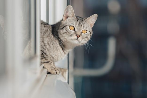 흑백 줄무늬 고양이는 앞발을 창 가장자리에 놓고 밝고 화창한 날씨에 거리를 내다 봅니다.