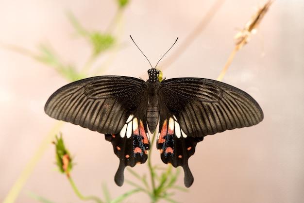 À¸ºчерная бабочка на поверхности природы.