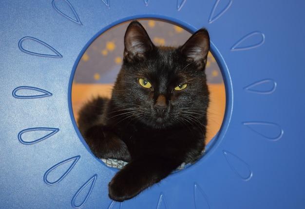 Черная кошка выглядывает из синей мебели и смотрит прямо в кадр