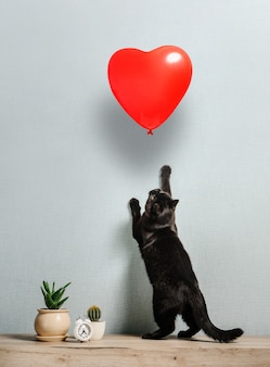검은 고양이가 뒷다리에 서서 하트 모양의 풍선을 얻습니다. 발렌타인 데이 컨셉