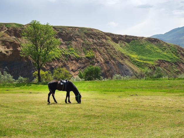 春の山の牧草地で馬具に乗った黒い馬。山の牧草地のジューシーな若い緑。