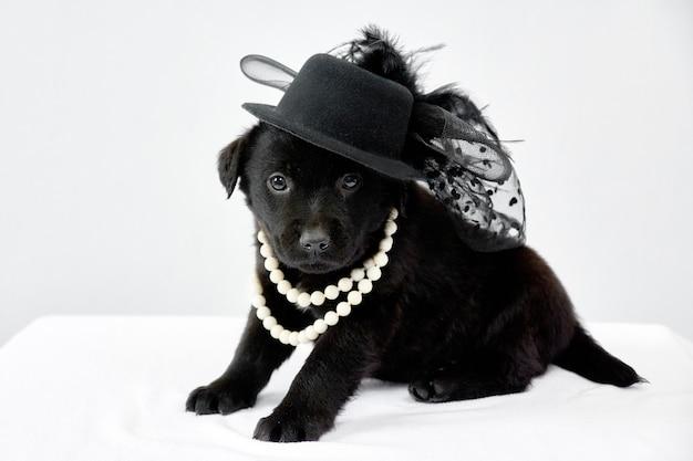 흰색 테이블에 모자를 쓴 검은 강아지