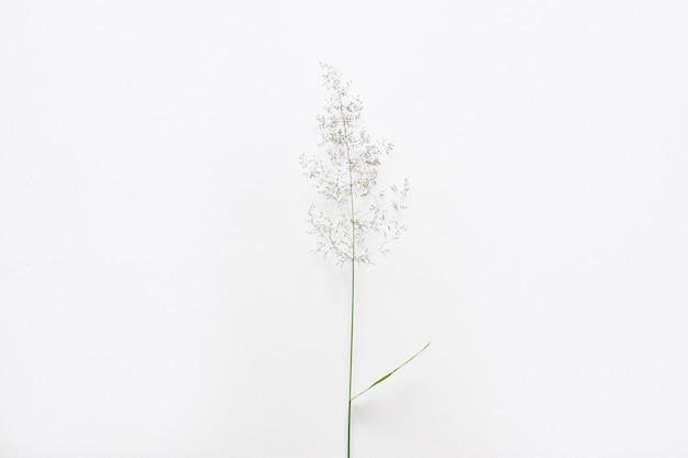 草の葉はベージュの背景の雑草です。環境にやさしい製品です。ミニマリズム。
