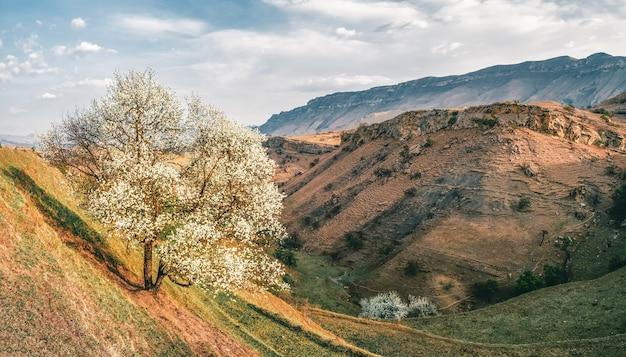 ロッキー山脈の尾根を背景に、山道の近くに咲く野生のリンゴの木。