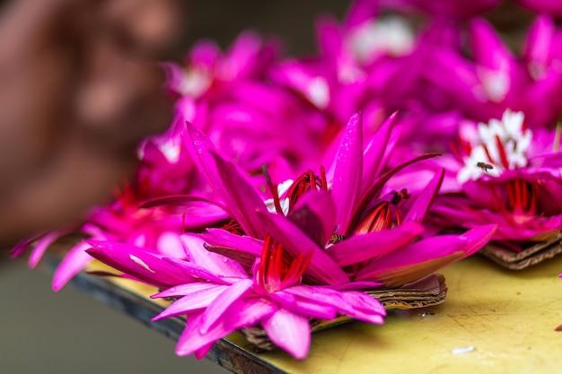 花蓮ピンクの花がクローズアップ。