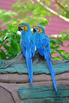 青と黄色のオウム
