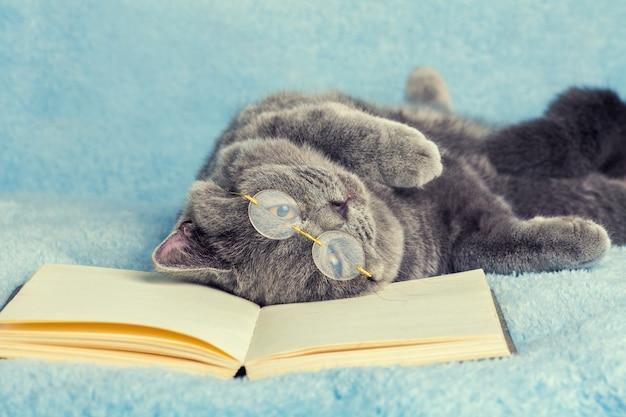 Синий британский кот в очках лежит и спит на спине на книге