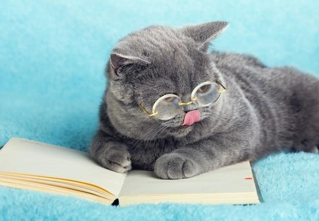 파란색 영국 쇼트 헤어 비즈니스 고양이는 노트북에 누워 안경을 쓰고있다