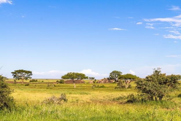セレンゲティの青い空。タンザニア、東アフリカ