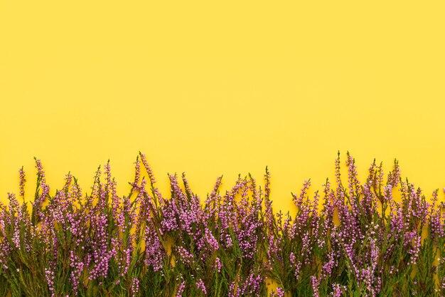黄色の背景にピンクの一般的な杢の花の境界線