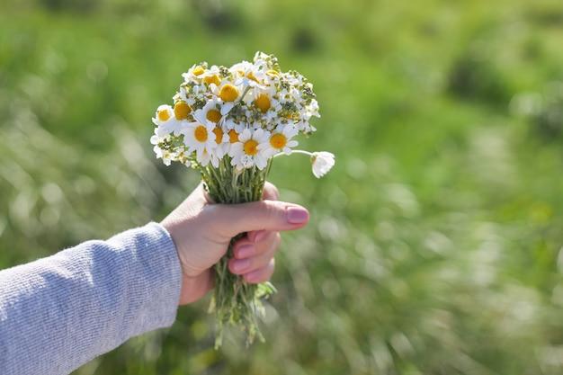 女性の手でフィールドヒナギクの花束
