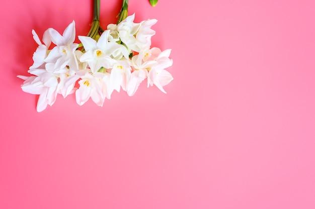 の花束は、テキスト用のスペースとピンクの背景に満開の白い色をナルシスします。