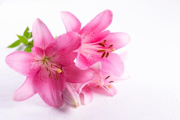 白い背景の光のピンクのユリの花束。