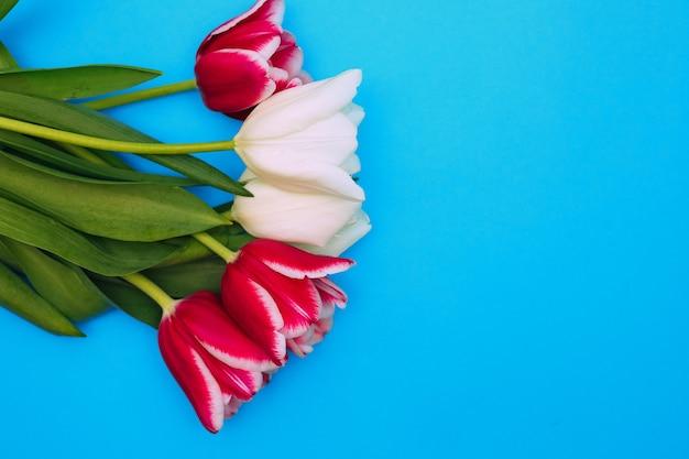 青い背景にピンクと白のチューリップの花束。美しいお祭りの花束。 3月8日とバレンタインデーのポストカード。
