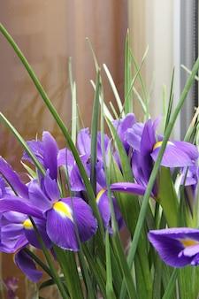작은 보라색 창포의 꽃다발