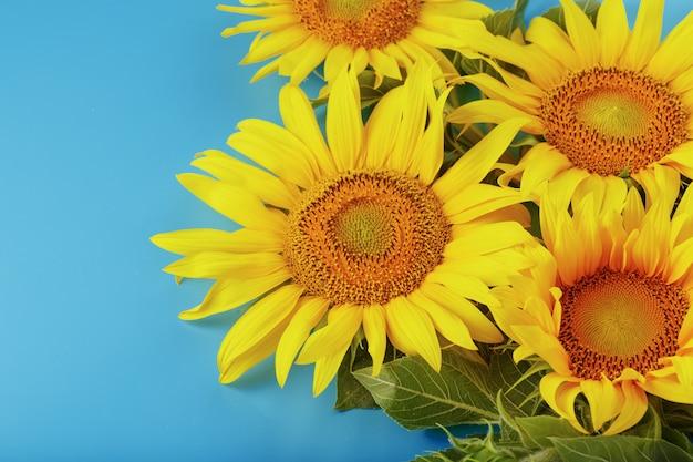 Букет цветов подсолнечника на синем.