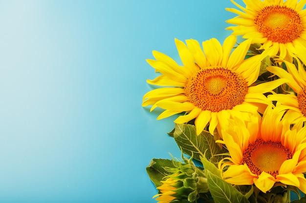 Букет цветов подсолнечника на синем