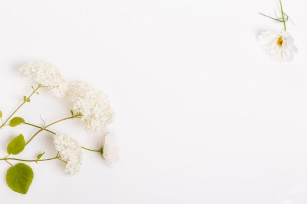 화이트 보드에 흰색 꽃 수국과 코스메아의 꽃다발. 공간을 복사합니다. 어머니, 발렌타인, 여성, 결혼식 날 개념.